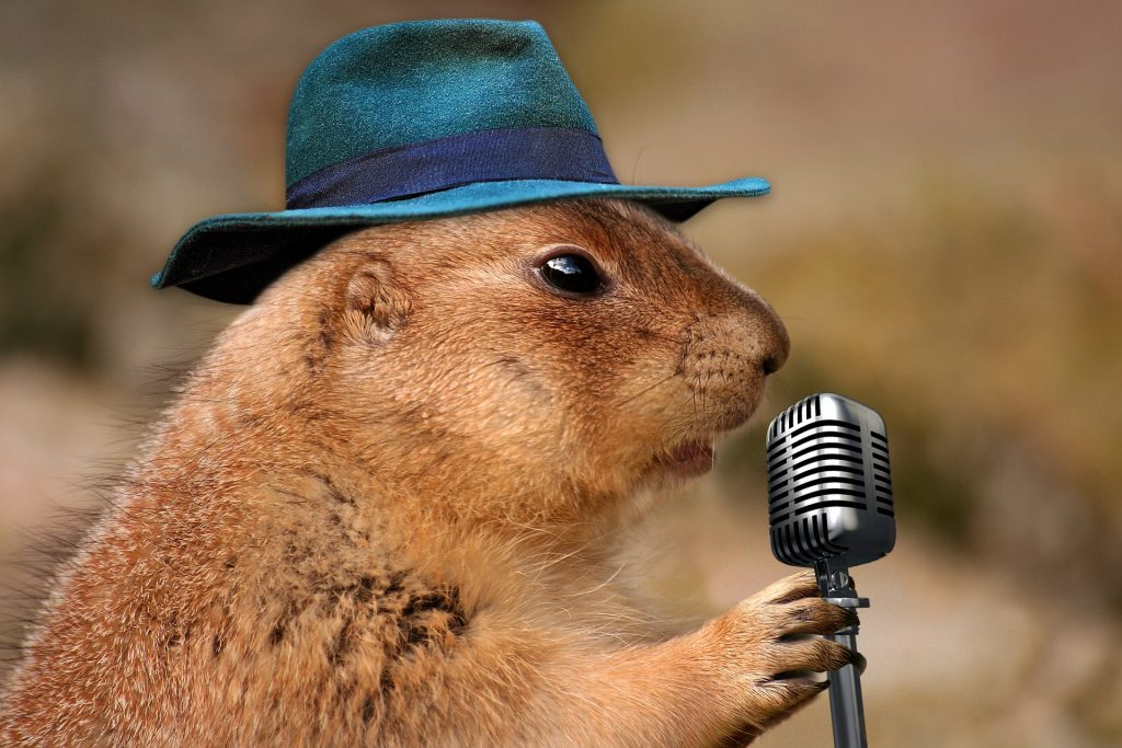 A prairie dog with a very small microphone, wearing a dark turquoise fedora
