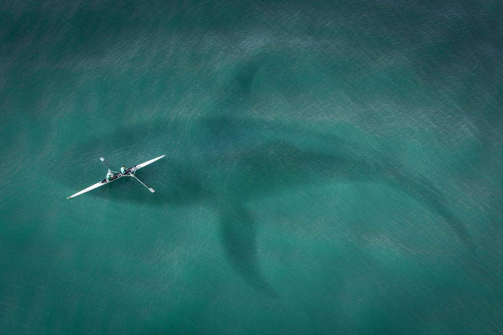 Enormous whale lurking under a tiny kayak